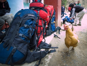 Chicken inspecting backpacks at start of Santa Cruz Trek